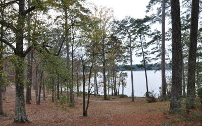 Family Traditions at Percy Quin State Park