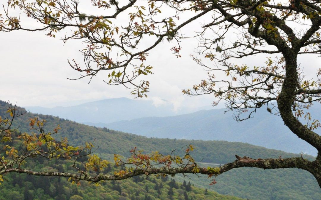 Early Summer Vacation: Great Smoky Mountains
