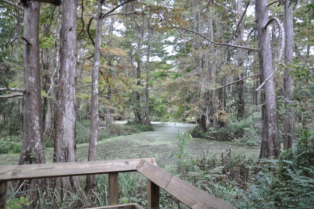 Northshore Trails: Northlake Nature Center