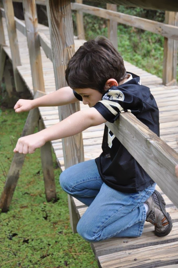Child looking for frogs in water