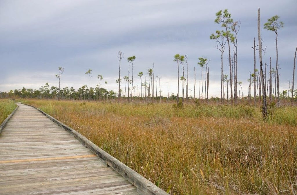Northshore Trails: Northlake Nature Center and Big Branch Marsh