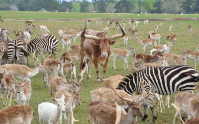 Zebras and Lizards at the Global Wildlife Center and Bogue Chitto State Park