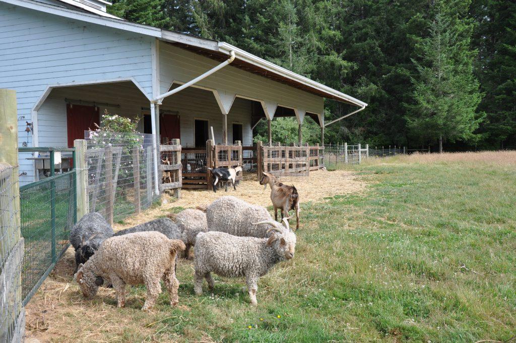 Farm animals at Airbnb in McKinleyville