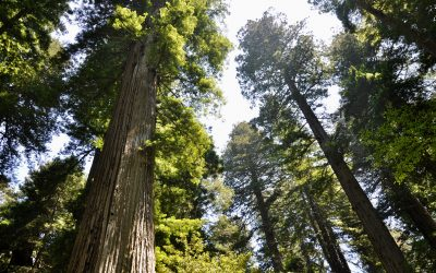 Northern California – Redwoods and Beaches