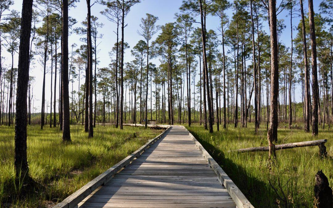 Top Day Hikes in Louisiana