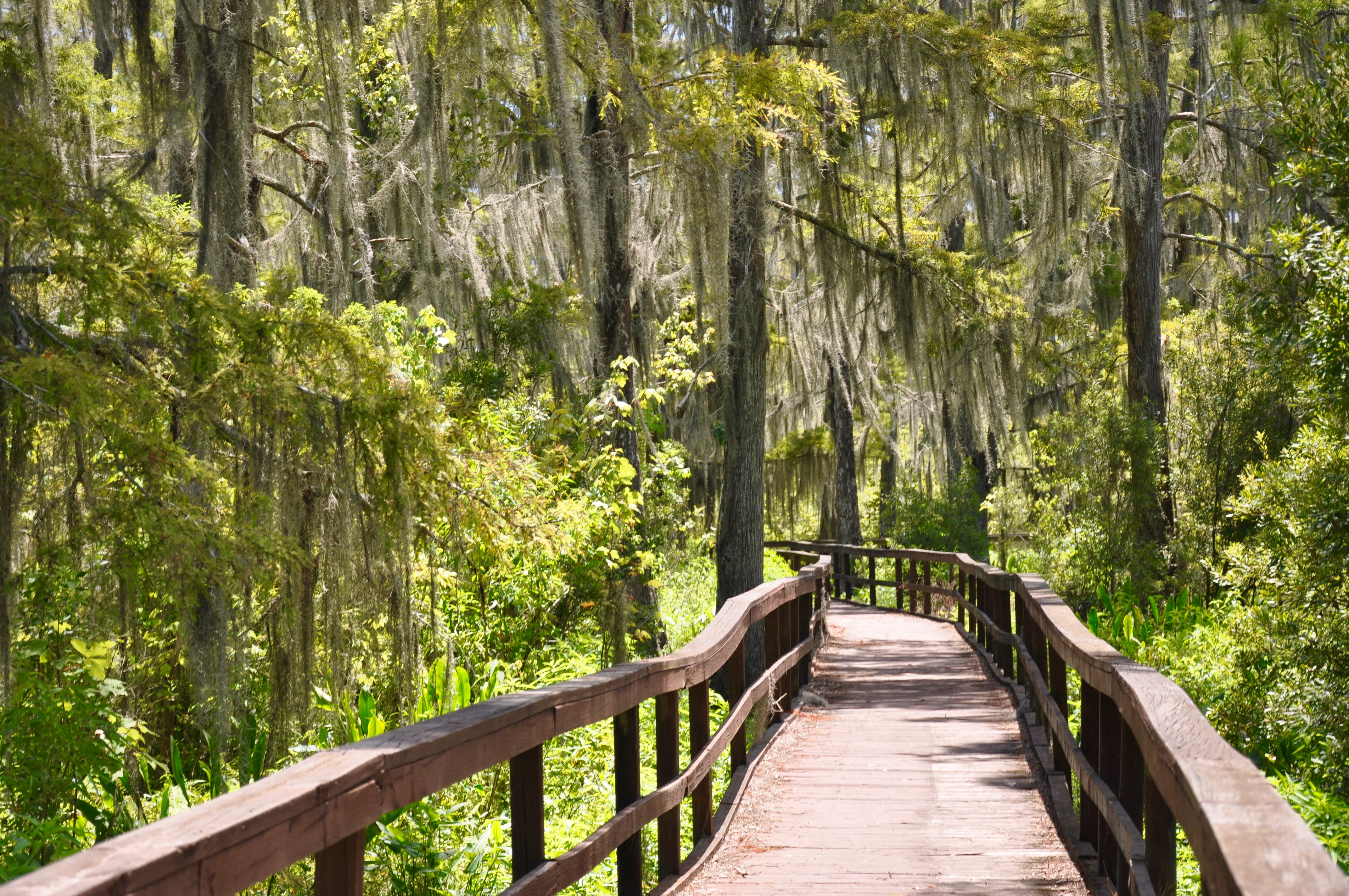 Hikes in Louisiana - Board through Lafitte's Wetland Trace